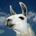 Llama Lunch Trek