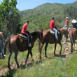 Countryside Horseback Tour