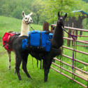 Llama Campout & Hike for Two